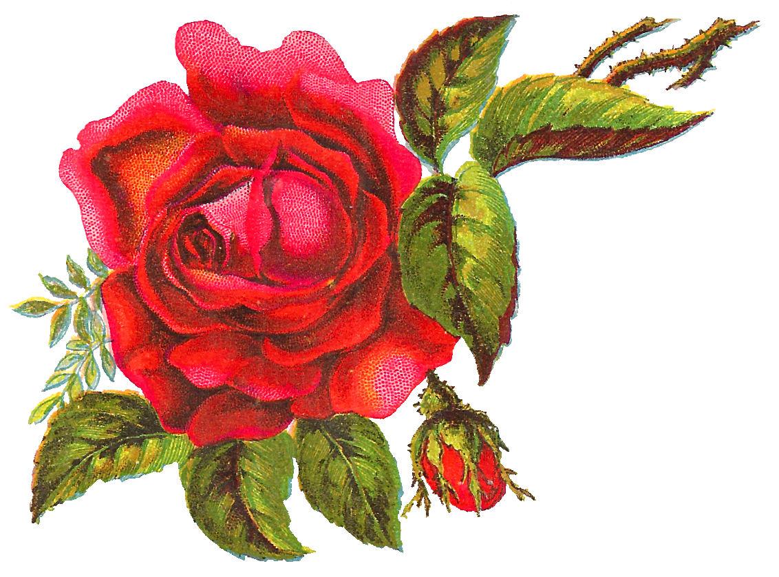 antique images digital red rose free flower clip art