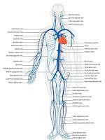 Cara meninggikan badan secara alami