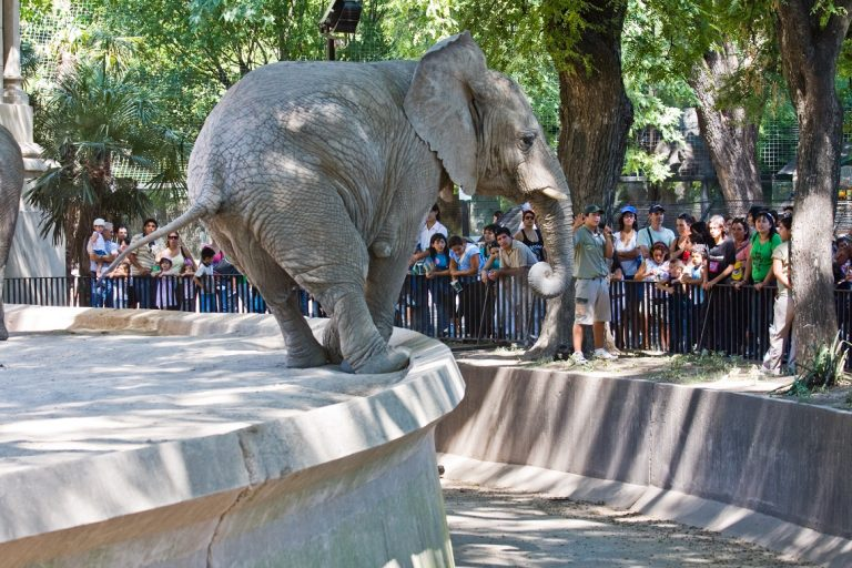 "Victory! Buenos Aires To Close Its Zoo Because ""Captivity Is Degrading"""