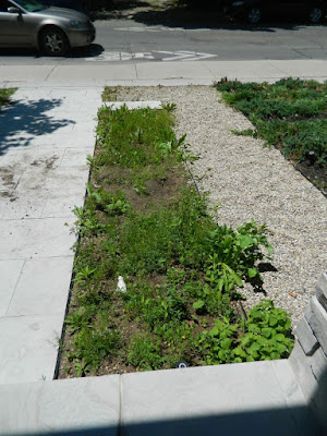 King West Village Toronto front garden cleanup after by Paul Jung Gardening Services