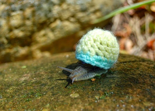 cute-animal-picture-snail.jpg