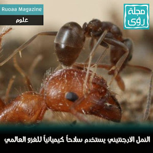 النمل الأرجنتيني يستخدم سلاحاً كيميائياً للغزو العالمي