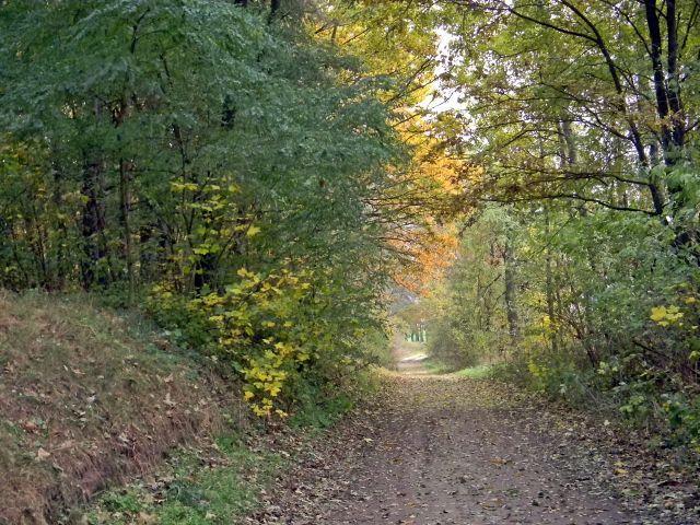 jesień, lasy, drzewa, przyroda