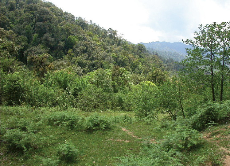 Image result for Northern Forest, Myanmar