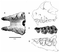 http://sciencythoughts.blogspot.co.uk/2016/01/fossil-bats-from-early-pleistocene-of.html