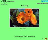 http://www.polavide.es/rec_polavide0708/edilim/plantas/plantas.html