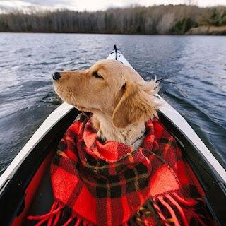 golden retriever with blanket, cozy golden retriever, outdoor golden retriever, outdoor dog, sporting dogs, family time dogs, golden retriever lake