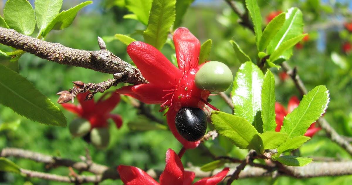 Decora interi ocna uma planta ex tica e cheia de cor for Plantas exoticas online