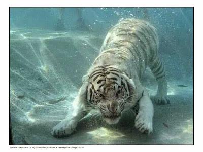 barrancos, beceite beseit, fedme, t-hocinos, Encuentro barranquero en Beceite, tigre