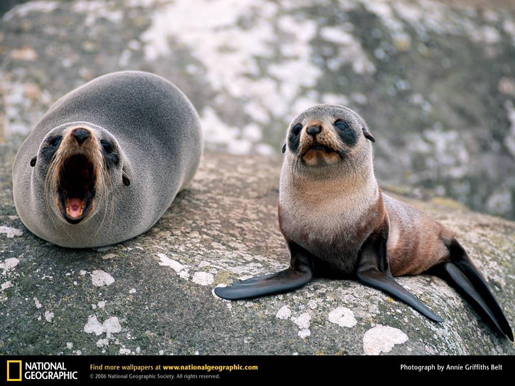 Deroucicho Cute Seal Photos