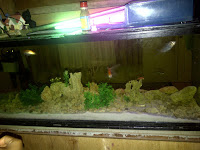Cara memelihara ikan hias dalam aquarium