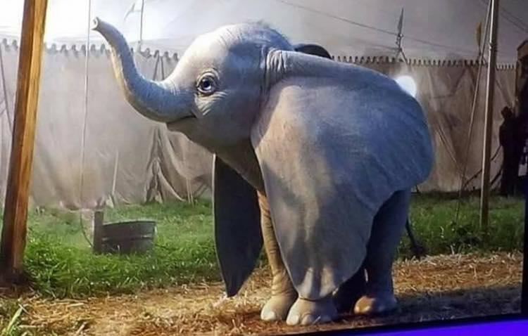 Dumbo, ecco la prima immagine del film animato di Tim Burton