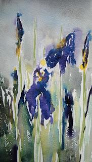 Siberian Iris 2016