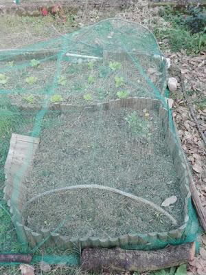Proteggere l'orto dagli insetti con una rete