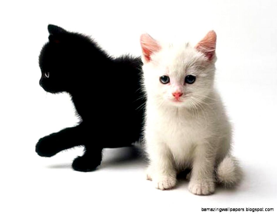 Cute Black And White Kitten Wallpaper | Amazing Wallpapers