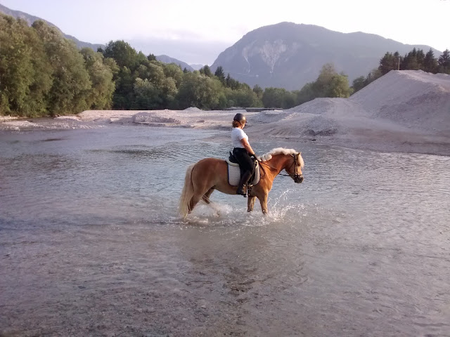 10 Quick Tips About Relocating With Horses