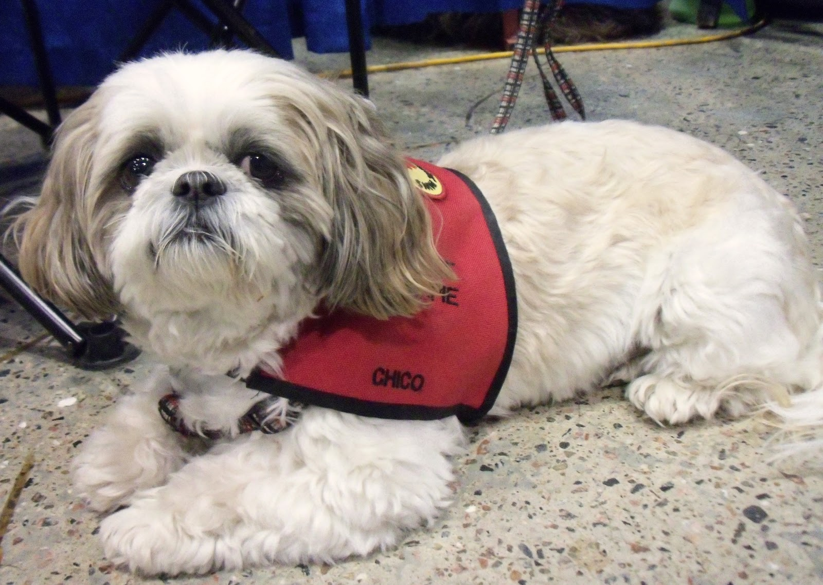 Montreal International Dog Show