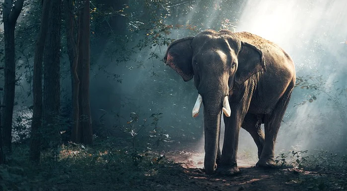 World Environment Day, Elephant Wallpaper