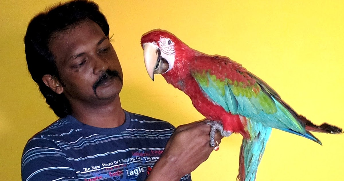 Preethi Farms (exotic birds breeders): Hand Tamed Parrots