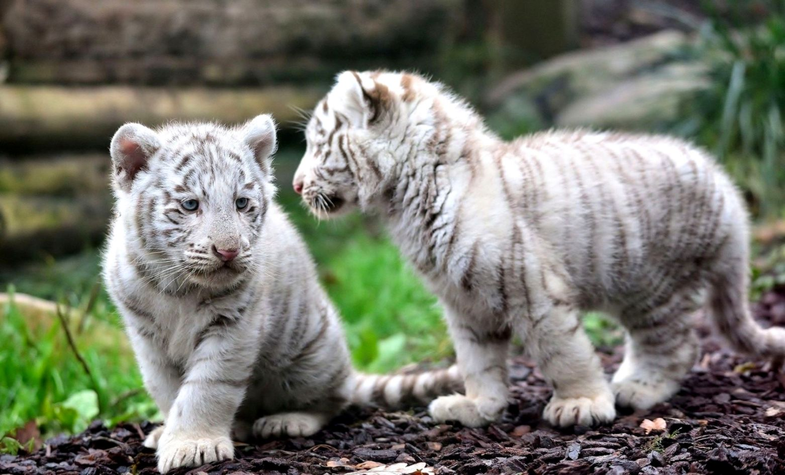 Baby Animal Wallpapers Wallpapers Pc