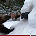 That's Really Amazing! A Wolverine Digs Out A Person Buried In Snow!