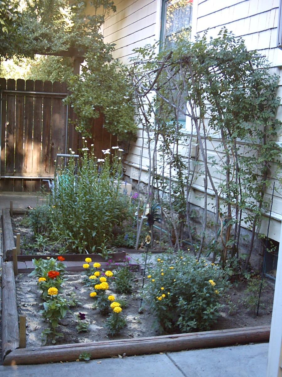 the north end loft my vegetable garden. Black Bedroom Furniture Sets. Home Design Ideas