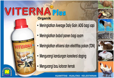 www ternak sapi com