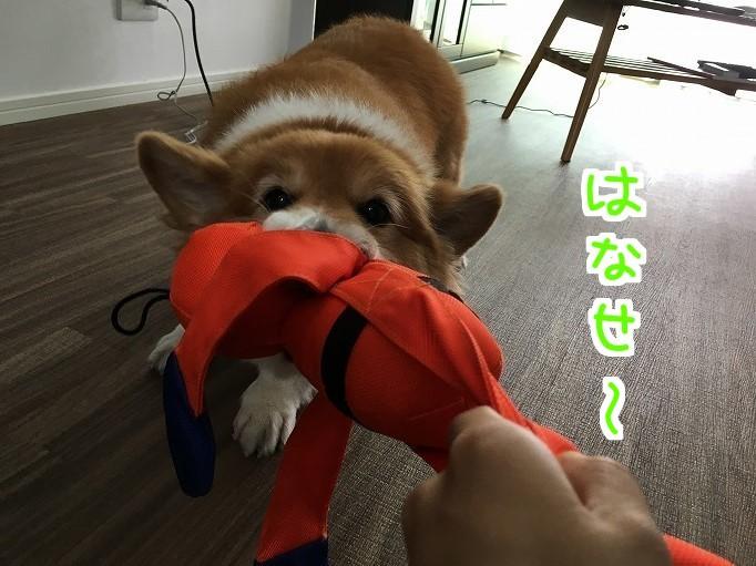 オレンジレンジャーと風太04