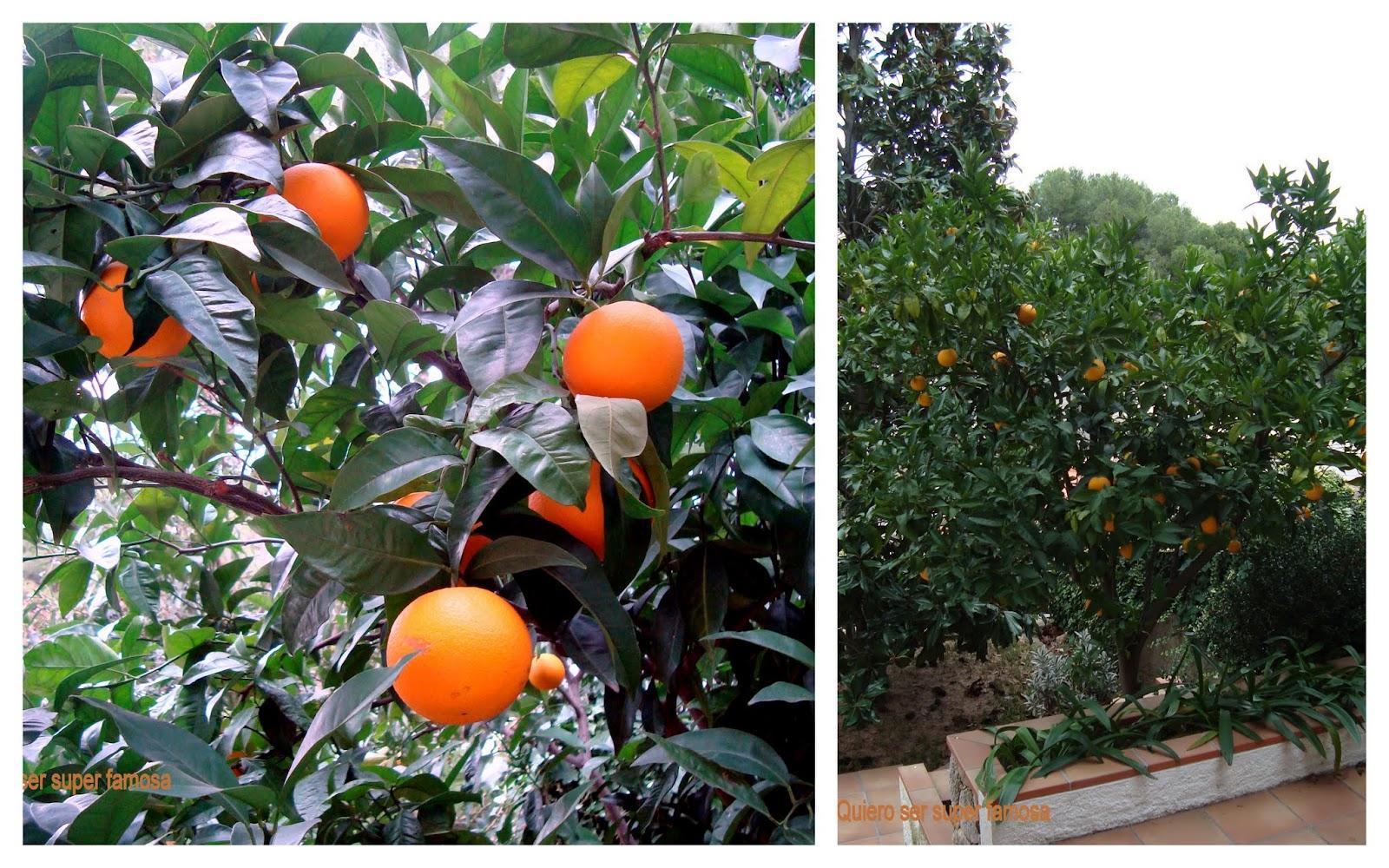 QUIERO SER SÚPER FAMOSA: Smoothie de naranja, zanahoria, y manzana