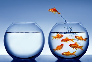 cara memelihara ikan hias di akuarium kecil,cara memelihara ikan hias di akuarium bulat,cara memelihara ikan dalam akuarium,makanan ikan hias aquarium,cara merawat ikan hias air tawar,