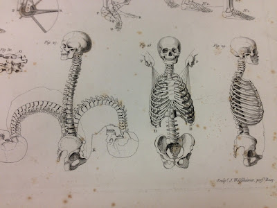 Anatomical images from the book
