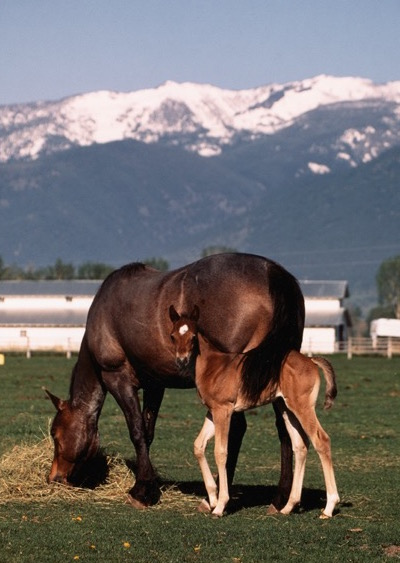 Mare and foal in meadow