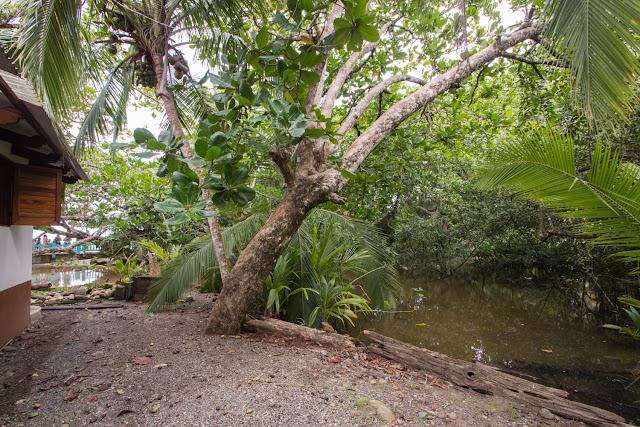 Río cerca del hotel Kelly Creek en Cahuita