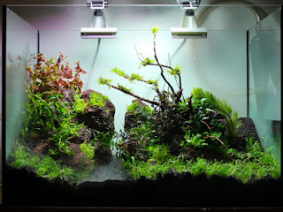 tanaman-aquascape-tumbuh-subur.jpg