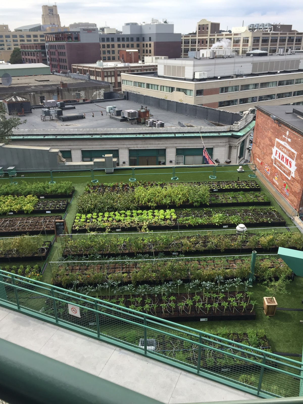 But What We Loved Was The Garden! This Rooftop Green Space Was Recently  Planted In The Spring Of 2015 And Transformed An Old Rubber Roof Into A  Fruitful ...