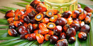 MCX crude palm oil, MCX Crude palm oil tips, agri commdity tips, Agri commodity calls,