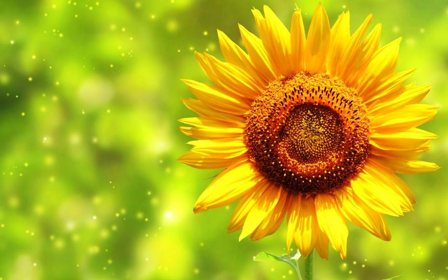 Menjadi Matahari
