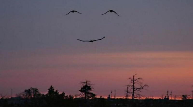 três pássaros voando, dois acima e um abaixo suas asas formam uma figura sorridente