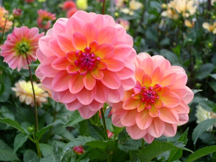 a collection of beautiful flowers wallpaper cute and