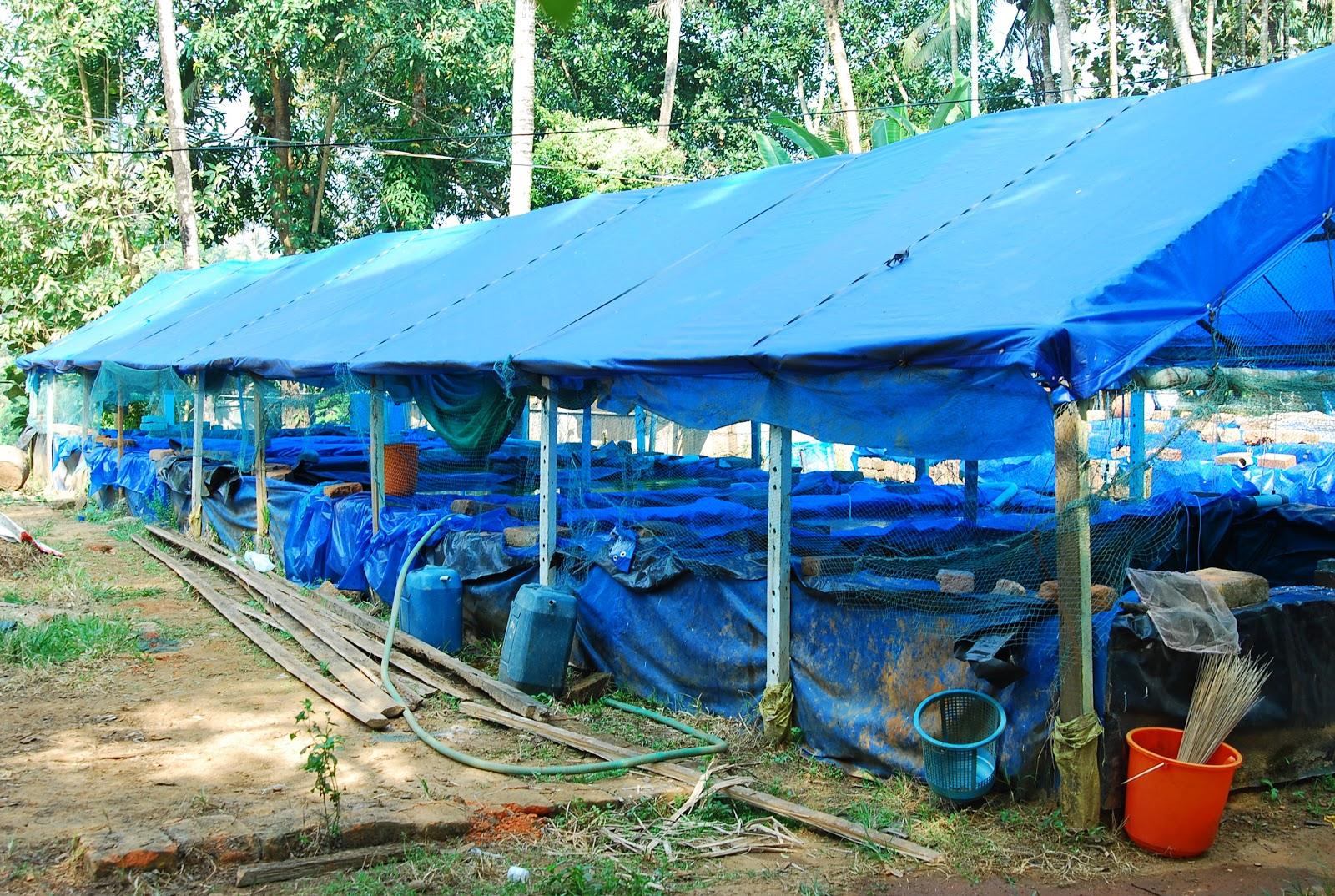 Anna Aqua Pets Ornamental Fish Farm In Kottat Chalakudy Kerala