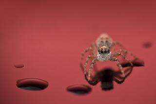 Increíbles  y detalladas fotos de insectos.