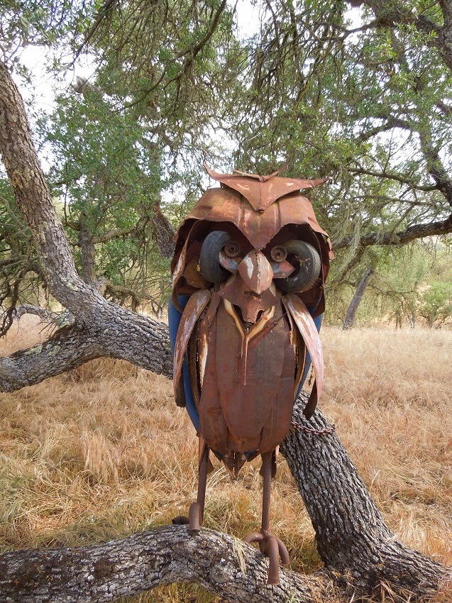 What Sort of Owl Is That in the Oak Tree?