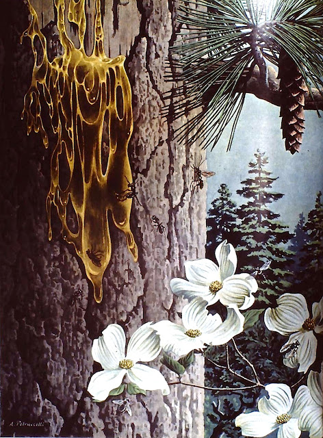 Antonio Petrocelli illustration of tree sap