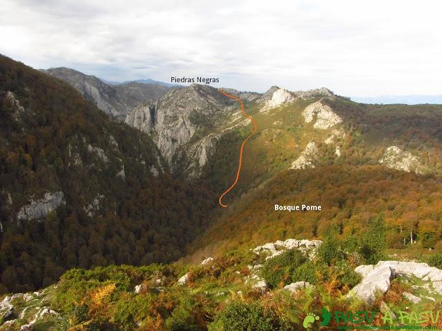 Bosque de Pome y Piedras Negras desde el Mirador del Rey