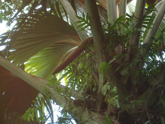 site de rencontre cocotier