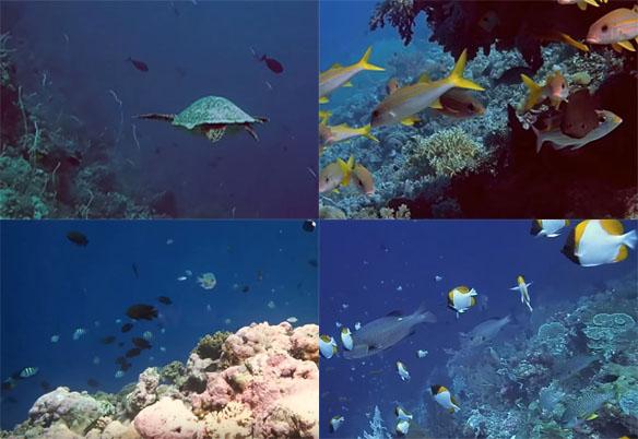 Pulau Wakatobi Indonesia