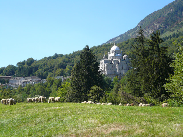 re-vigezzo-gregge-pecore