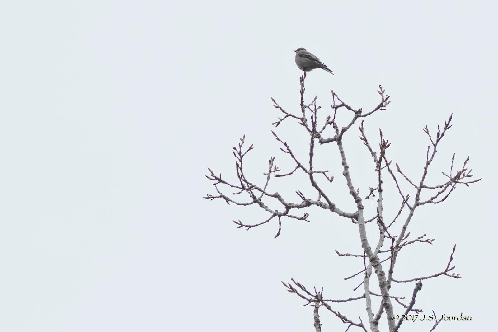 Jerry S Birding Digiscoping Blog