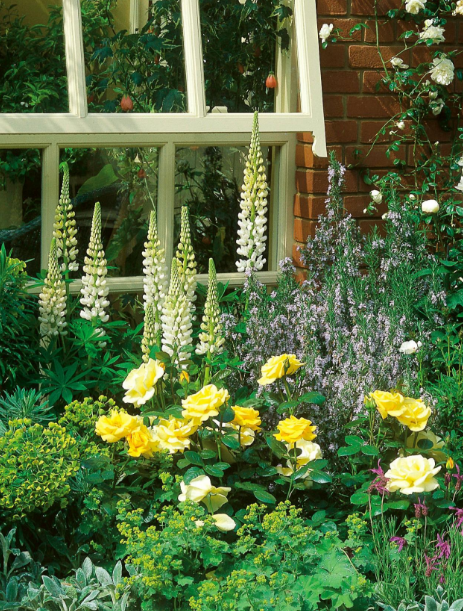 Window Box Overflows with Blooming Perennials