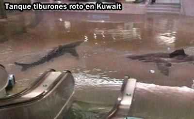 inundacion-tiburones
